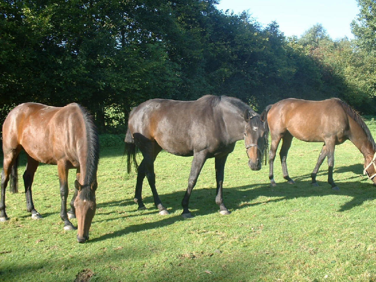 Young Horses For Sale