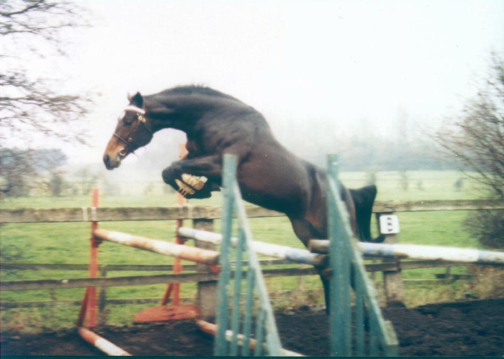 entrainement Honours%20Degree%20Jumping